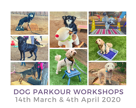 Copy of Copy of DOG PARKOUR WORKSHOPS.pn