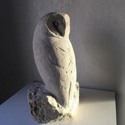 Barn Owl in Limestone