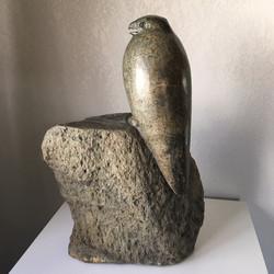 Peregrine Falcon in Granite