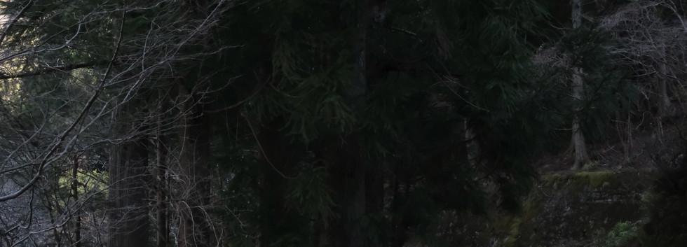 ダイハツミゼット