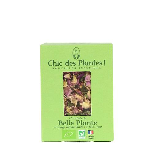 Belle Plante - Infusion Détox