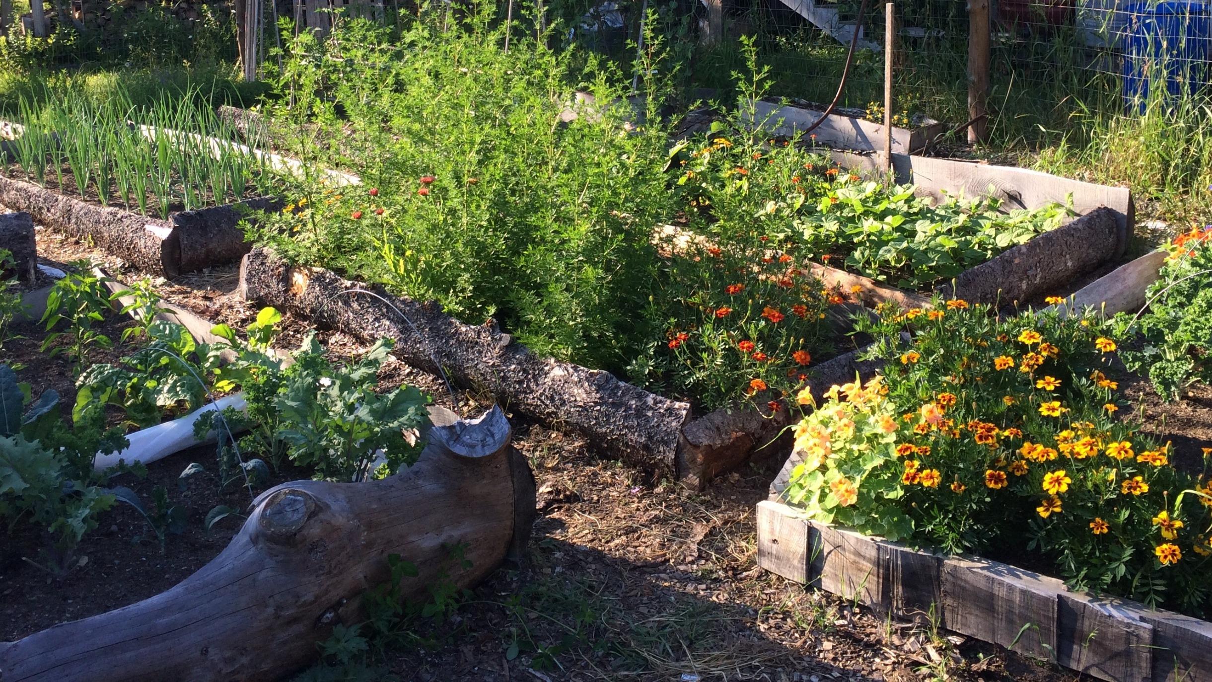 Rustic Vegetable Garden