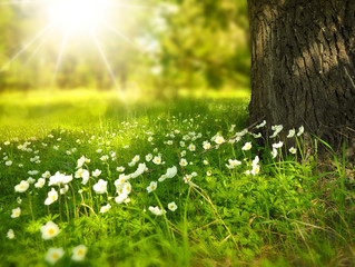 Spring and Summer around the Corner!