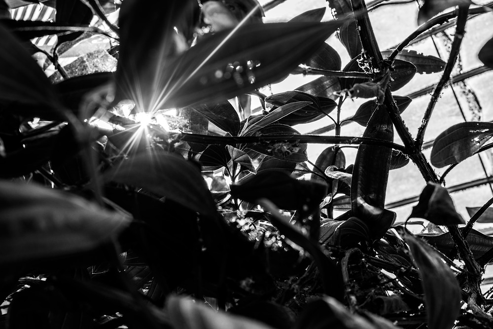 lady mac lifestyle botanic gardens dublin
