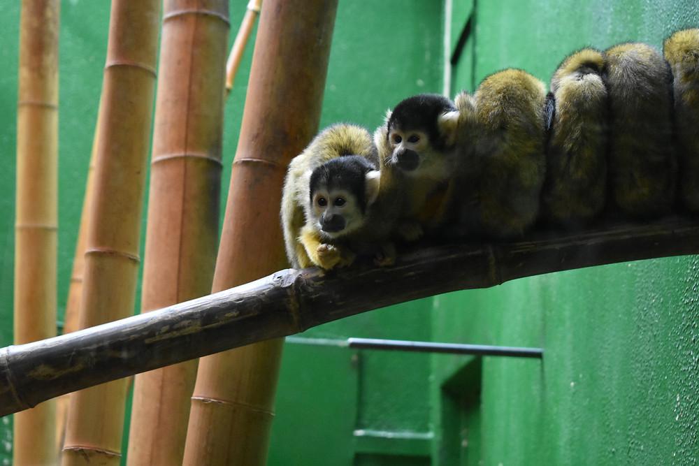 Fun Monkeys!
