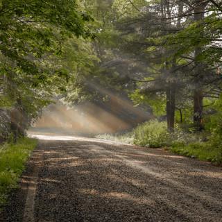 light (37 of 72).jpg