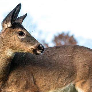 deer-20-edit.jpg