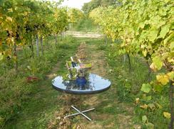 Vineyard Photoshoot