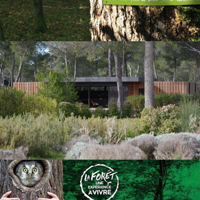 Journée internationale des forêts 2021