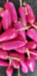 cactusberries.jpg