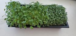microgreengarden.jpg