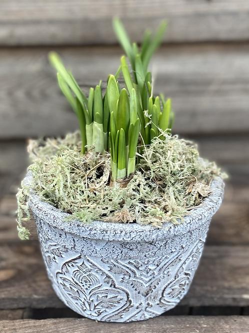 Tête-à-tête in baroque pot