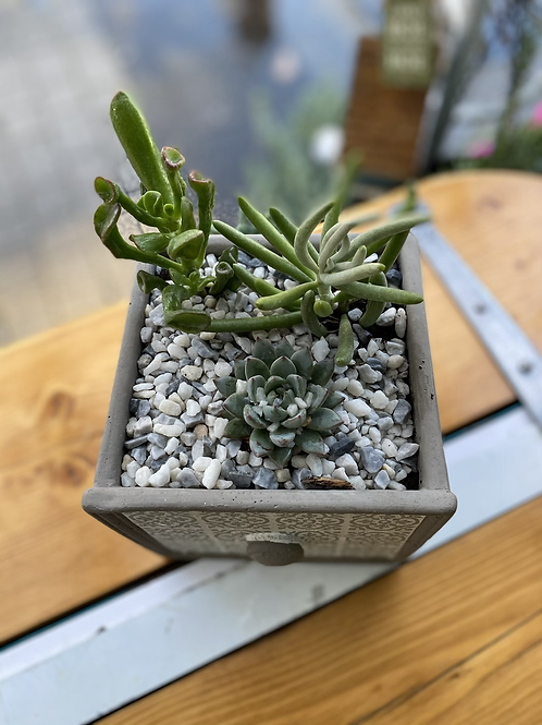 Succulent drawer planter