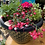 Thumbnail: Summer flower pot