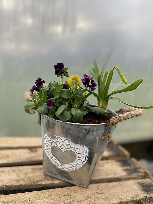 Spring plants/bulbs in zinc heart pot
