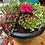 Thumbnail: Summer flower pot