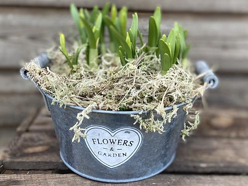 Tête-à-tête in zinc flowers and garden pot
