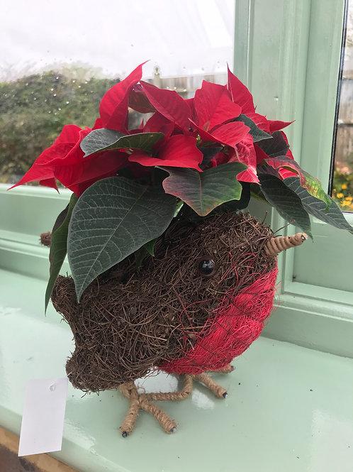 Robin planter with Poinsettia