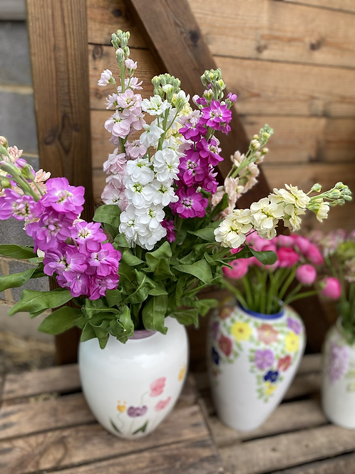 Mixed colours scented stocks - 10 stems