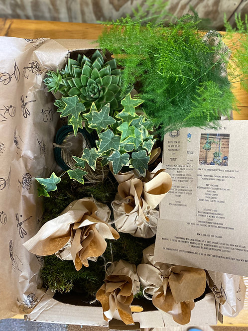 DIY Kokedama x3 plants