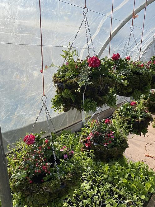 Summer hanging basket