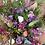 Thumbnail: Spring Love