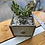 Thumbnail: Succulent drawer planter