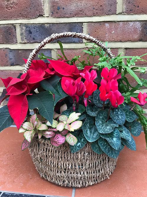 Festive basket (large) 25cm round