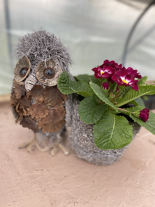 Owl Planter with primrose