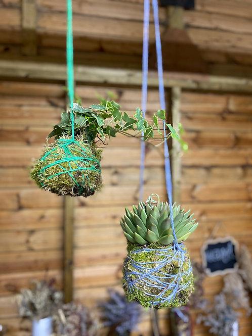 DIY Kokedama Trailing Ivy plant