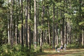 W.G. Jones State Park.jpg
