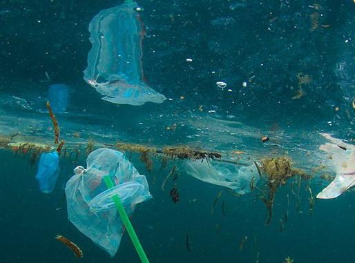 Los popotes dañan a especies marinas y contaminan