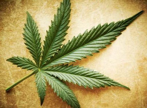 ¿Por qué se celebra hoy el día mundial de la marihuana?