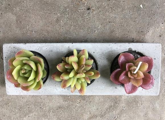 Bougies décoratives mini succulentes