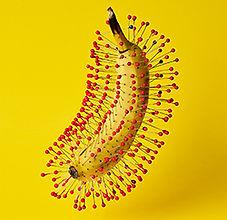 Sage Szkabarnicki-Stuart, Banana, 24x30%