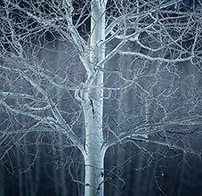 Blue_Forest.jpg