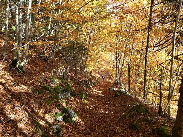 Autumn trail.JPG