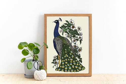 Peacock and Camellia Print