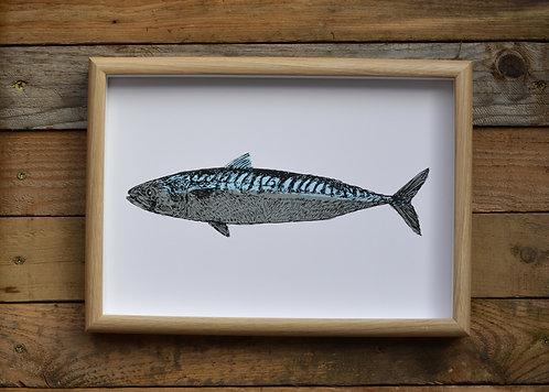 Mackerel Screen Print