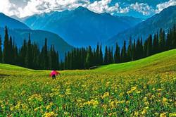 Desan, Kalam, Swat Pakistan