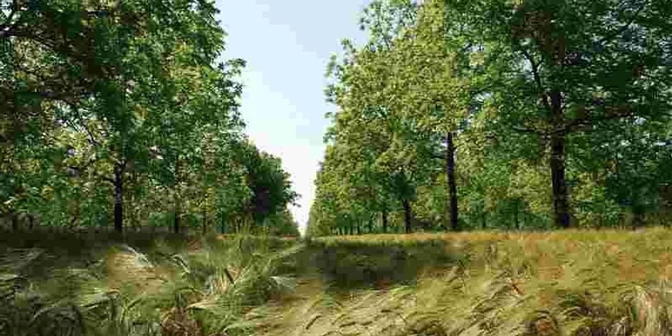 Chantier participatif : Plantation d'arbres sur  mon parcours à volailles