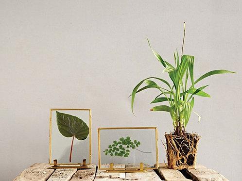 Brass & Glass Standing Frame