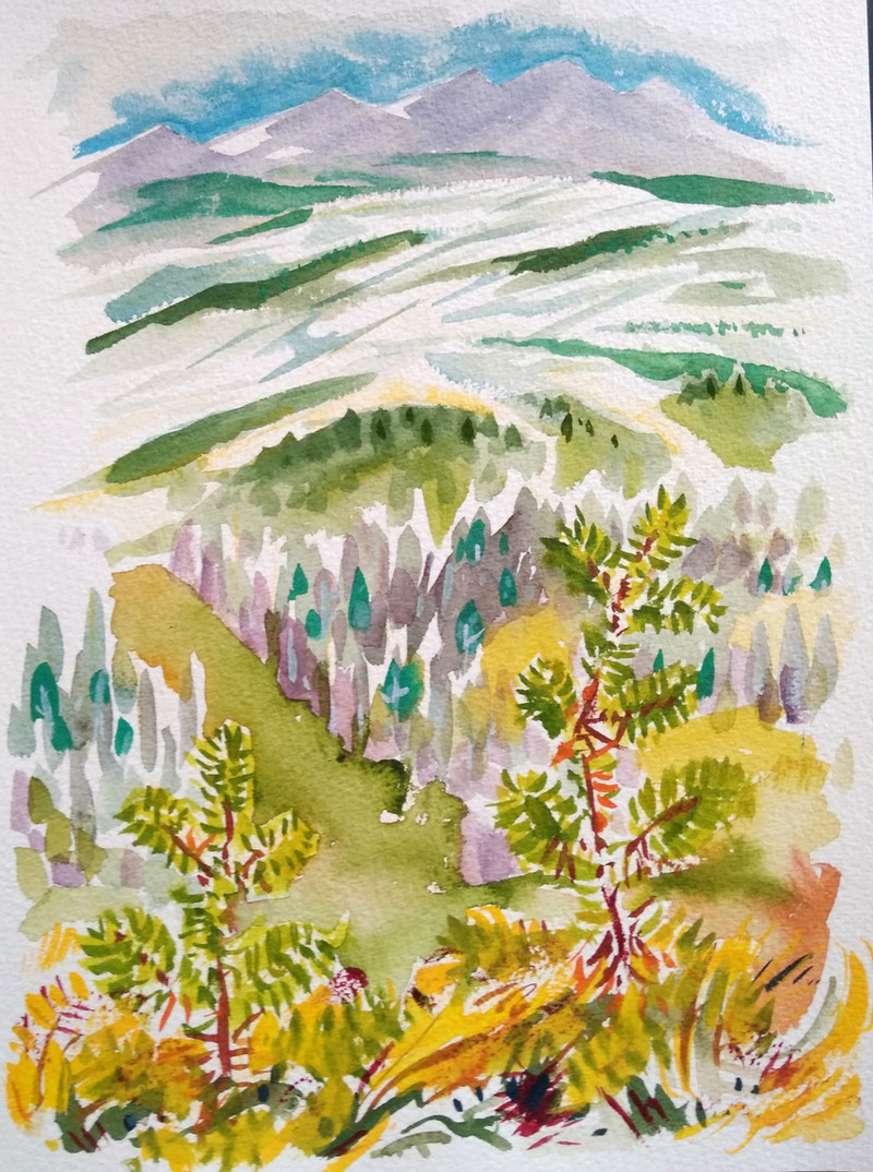 Young Mountain Pines