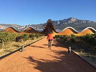 Winery visit after a bike ride though La Rioja