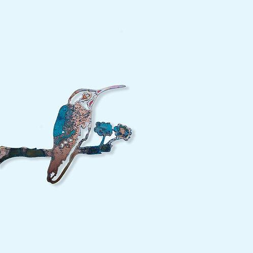 Kolibrie zittend BLUE