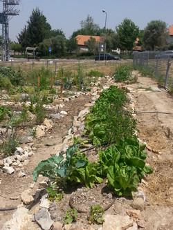 גינת ירק קהילתית בכפר ורדים