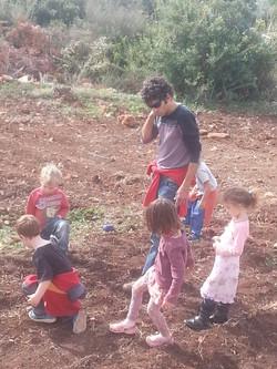 ילדי הגן זורעים חומוס בכליל
