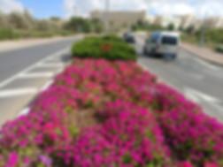 פרחים בכניסה לעיר
