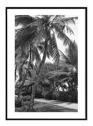 B&W Palm Trees Print