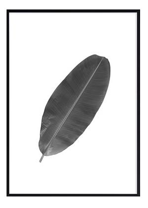 B&W Banana Leaf Print